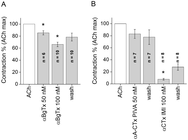 The relative effect of specific α7-nAChR antagonists to block ACh (10 −5 M) elicited responses. A- αBgTx attenuated the ACh evoked contractions in a concentration dependent manner. The blocking effects of 50 nM and 100 nM toxin were statistically significant. The recovery is almost complete. B- The block by 50 nM <t>αA-CTx</t> <t>PIVA</t> was not significant, while the α-CTx ImI at 100 nM blocked almost completely the ACh elicited contraction. The recovery from block was partial. n = number of muscles. Asterisks indicate a significant difference from the control value: *P