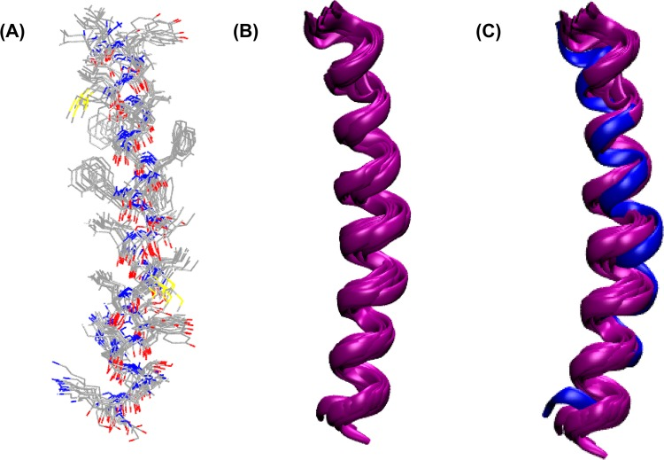 Results of the structure refinement of the KCNE1 TMD in proteoliposomes incorporating MTSL DEER distance-restraint data using an Xplor-NIH simulated annealing molecular dynamics protocol. (A) Overlay of the 10 structures with lowest energy obtained from restrained simulated annealing calculations using amino acids 45–71 (transmembrane domain) of KCNE1. The final structures were generated by replacing the MTSL-labeled side chains by the native amino acid side chains with retention of the C β position in the label. (B) Ribbon representation of overlaid DEER structures. (C) Overlay of DEER structures and the previously determined NMR structure (blue cartoon represents micellar NMR structure, and purple cartoons represent DEER structures in lipid bilayers).
