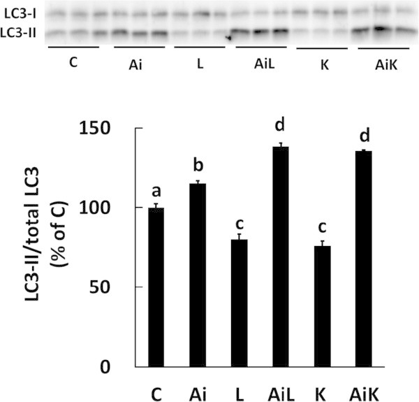 Lys suppresses the autophagic-lysosomal system through activation of Akt in C2C12 myotubes. Cells were treated for 30 min with DMSO (C), 10 μM Akti (Ai), 10 mM Leu (L), 10 mM Leu and 10 μM Akti (AiL), 10 mM Lys (K), or 10 mM Lys and 10 μM Akti (AiK). The ratio of LC3-II to total LC3 (LC3-I + LC3-II) in the lysates was determined by Western blotting. Results are expressed as the level relative to the control group. Values are means with SE (n = 3–4). Different letters indicate significant differences among the groups (p