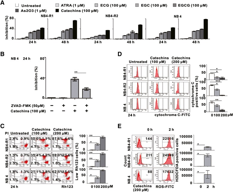 Catechins induced mitochondrial trans-membrane potential collapse, cytochrome C loss and ROS production in NB4 cells. (A) The inhibitory effect of NB4-R1, NB4-R2 and NB4 cells in response to ATRA (1 μM), As 2 O 3 (1 μM), EGCG (100 μM), ECG (100 μM), EGC (100 μM) and Catechins (100 μM) treatment for 24 and 48 h. (B) Growth inhibition of NB4 cells was significantly abrogated by pan-caspase inhibitor ZVAD-FMK (50 μM). **P