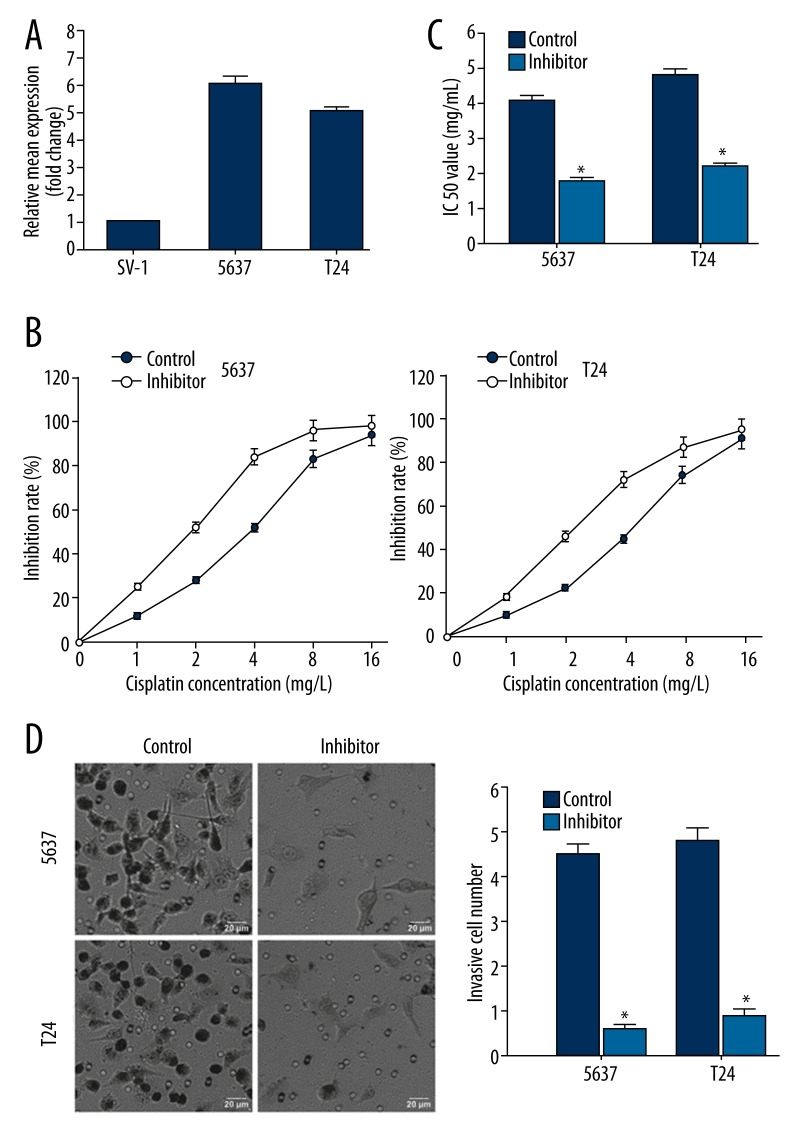 miR-150 inhibition enhances chemosensitivity to Cisplatin and suppresses invasiveness of MIBC cells. ( A ) miR-150 expression in MIBC cell lines tested by qRT-PCR. ( B ) Dose-inhibition rate curves plotted from three independent MTS assays showing the effect of miR-150 inhibition on MIBC cells' chemosensitivity to cisplatin. ( C ) IC50 values affected by miR-150 inhibition. ( D ) Transwell assay performed on the control cell lines and miR-150-inhibited cell lines. * p