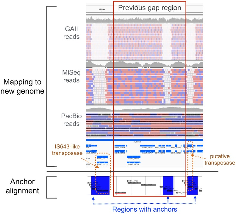 Example of one previous gap region. The region correspond to 4,003,725 bp to 4,007,944 bp in the previous genome. The upper part of this figure shows the mapping results of Illumina GAII reads, MiSeq reads, and PacBio reads. The bottom part displays an anchor alignment within the new genome using Murasaki, a multiple genome comparison program [33] . For the anchor alignment, blue regions represent aligned anchors, which means that the same subsequences are present in other positions of the genome. For the mapping results, reads coloured with white were mapped with mapping quality zero; that is, each read is not uniquely mapped to one position. Compared with the mapping results of Illumina reads, blue regions in the anchor alignment corresponded to positions where white reads were mapped. Additionally, both ends of the gap region include transposases with repetitive sequences.