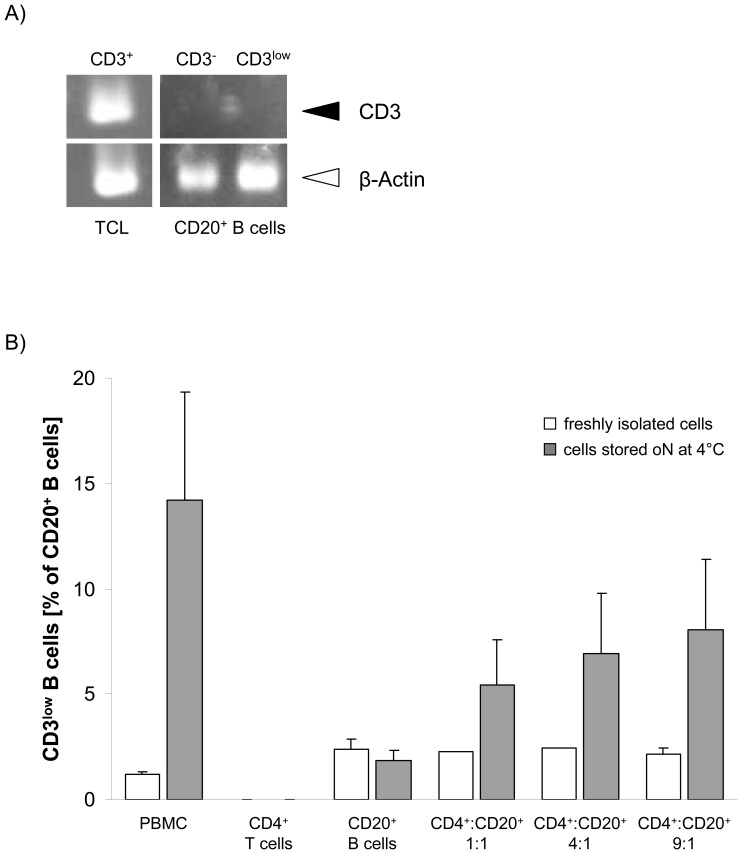 Detection of CD3 on B cell surfaces is a result of cell number- dependent T-B cell interactions. Semiquantitative RT-PCR for CD3 was performed using RNA isolated from 7×10 5 MACS-purified CD20 + B cells and a CD3-expressing T cell line (TCL). (A) Endogenous expression of CD3 was only found in the TCL, which served as a positive control, but neither in CD3 - CD20 + nor in CD3 low CD20 + B cells. β-actin was used as loading control. (B) The appearance of CD3 low CD20 + B cells was demonstrated after co-culture of MACS-purified CD4 + T cells and CD20 + B cells in different ratios overnight (oN) at 4°C. Storage of CD20 + B cells alone under the same conditions was not associated with an induction of the CD3 low CD20 + B cell population, pointing at the need for T cells. Furthermore, the quantity of CD3 low CD20 + B cells was dependent on the number of CD4 + T cells, i.e. increasing T-B cell ratios caused elevated numbers of CD3 low CD20 + B cells. Shown are the results of up to three independent experiments.