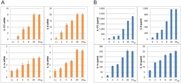 Cytokine induction in NHKs by the synthetic LL-37 peptide. To assess the ability of LL-37 to induce cytokines, NHKs were incubated with 3 µM LL-37 for 0, 2, 4, 8, 20, and 24 h at 37°C. (A) Expression levels of mRNAs encoding IL-17C, IL-8, IL-1α, and IL-1β mRNA, measured by qRT-PCR. The relative mRNA levels are expressed as means ±SDs (in -fold changes). Enzyme-linked immunoassays (ELISAs) were performed on culture media. All later values yielded by both qRT-PCR and ELISA were significantly different from those at 0 h (A, B, p