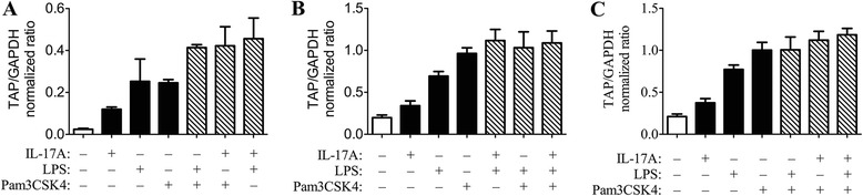 Effect of stimulation with single agonists compared to combined agonists. Cultured bovine tracheal epithelial cells were stimulated for 16 h in triplicate with various combinations of 1 μg/mL Pam3CSK4, 316 ng/mL IL-17A, or 0.1 μg/mL LPS. Tracheal antimicrobial peptide gene expression was measured as above. The effects of combined agonists were greater than that of interleukin-17A (IL-17A) alone, but minimally or not different than that of lipopolysaccharide (LPS) or Pam3CSK4 alone. The data shown (panels A, B and C) represent 3 studies conducted on different days using cells from different calves.