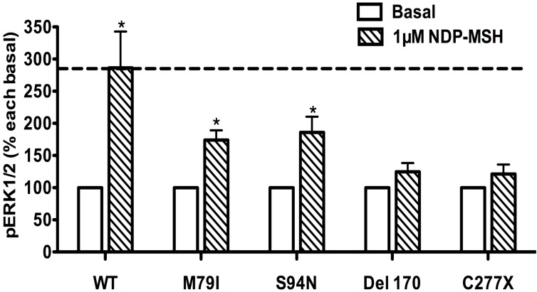 The ligand-stimulated pERK1/2 levels in HEK293T cells transiently transfected with Class I mutants. Results are expressed as percentage of the value obtained in non-stimulated cells and represent the mean ± SEM of five independent experiments. * indicates significant differences from basal pERK1/2 level (P