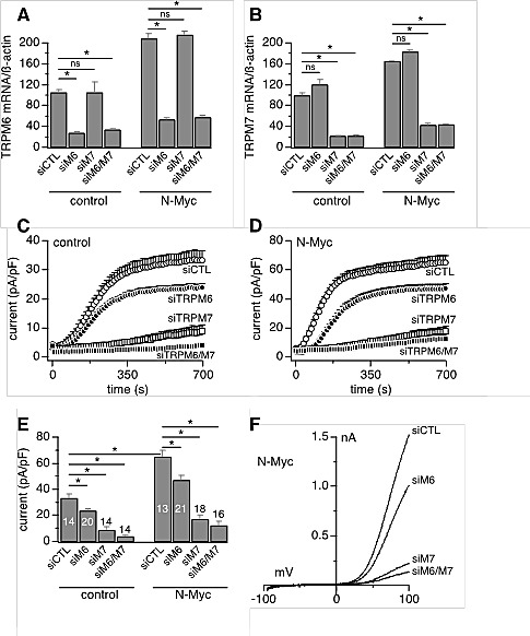 Endogenous MagNuM currents are mediated by TRPM7 and TRPM6 Currents were measured in divalent-free internal solution with 5 mM EGTA and 5 mM EDTA. A-B, siRNAs efficacy measured by qRT-PCR analysis of TRPM6 (A) and TRPM7 (B) expression levels in the SHEP-21N cell line under both control and N-Myc upregulation conditions (n = 9). C, MagNuM currents in control SHEP-21N cells treated with negative non-silencing (siCTL) or specific siRNA sequences against TRPM7, TRPM6, TRPM7 TRPM6. D, current measurement in N-Myc-expressing SHEP-21N cells treated with negative (siCTL) or specific siRNA sequences against TRPM7, TRPM6, TRPM7 TRPM6. E, statistical summary of current amplitudes at 700 s as in c-d (*, p