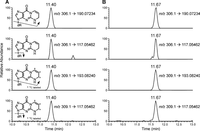 Typical <t>LC–NSI–HRMS/MS</t> chromatograms obtained upon analysis of 5,6-dihydro-M 1 dG in human leukocyte DNA from a (A) smoker and (B) nonsmoker.