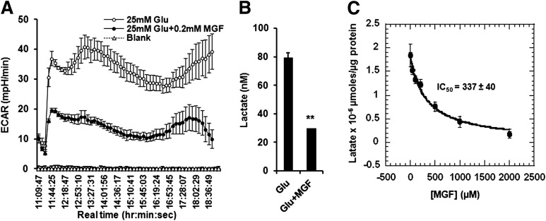 MGF inhibits lactic acidosis. A : ECAR recorded in the same Seahorse Bioscience Metabolic Flux experiments as shown in Fig. 4 E . B : Lactate formed in the experiments shown in A was measured by a d -lactate assay kit. C : <t>C2C12</t> myotubes were incubated overnight in glucose-free and sodium pyruvate–free <t>DMEM</t> containing l -glutamine and 2% horse serum, in the presence of various concentrations of MGF, and then incubated in media containing 25 mmol/L glucose in the presence of matching concentrations of MGF for 8 h. Media were collected, and lactate in the media was measured by a d -lactate assay kit (Eton Biosciences). These experiments were all conducted three to four times and each time with triplicates for each condition. Values are average ± SEM. ** P