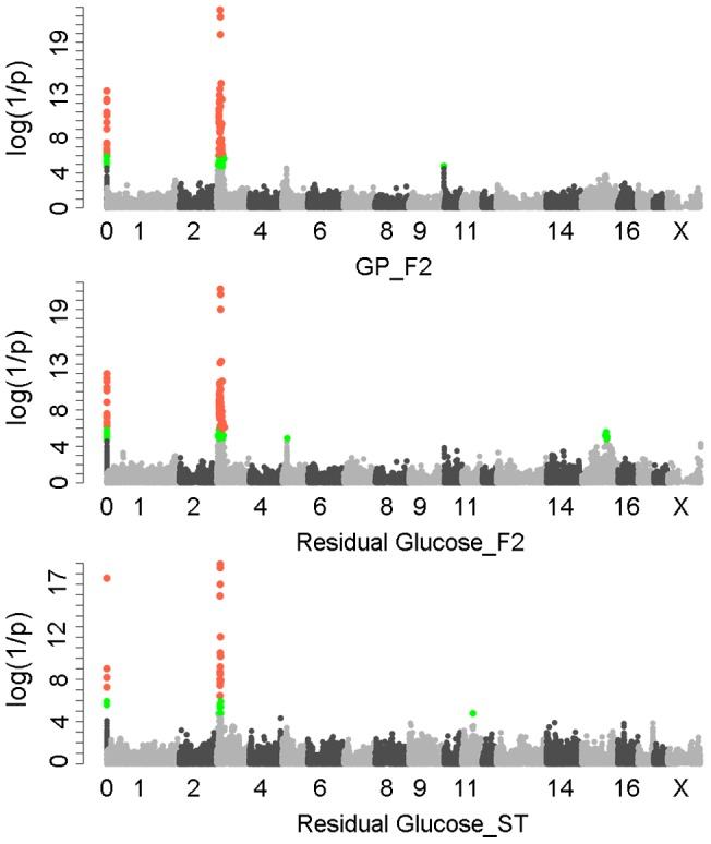 "GWAS results for glycolytic potential and residual glycogen contents in longissimus muscle from the F 2 and Sutai populations. In the Manhattan plots, log 10 (1/P) values of the qualified SNPs were plotted against their genomic positions. ""Chromosome 0"" harbors SNPs that have not yet been mapped to the Sus Scrofa 10.2 assembly. It is most likely that the significant SNPs on chromosome 0 are located on chromosome 3 and have strong linkage disequilibrium with the top SNPs ss131031160 or ss131565361. The red and green dots represent the SNPs that reached 5% genome-wide and suggestive Bonferroni-corrected significances, respectively. The most significant SNPs for residual glycogen are ss131031160 and ss131565361 on SSC3 in the F 2 and Sutai (ST) pigs respectively. GP, glycolytic potential."