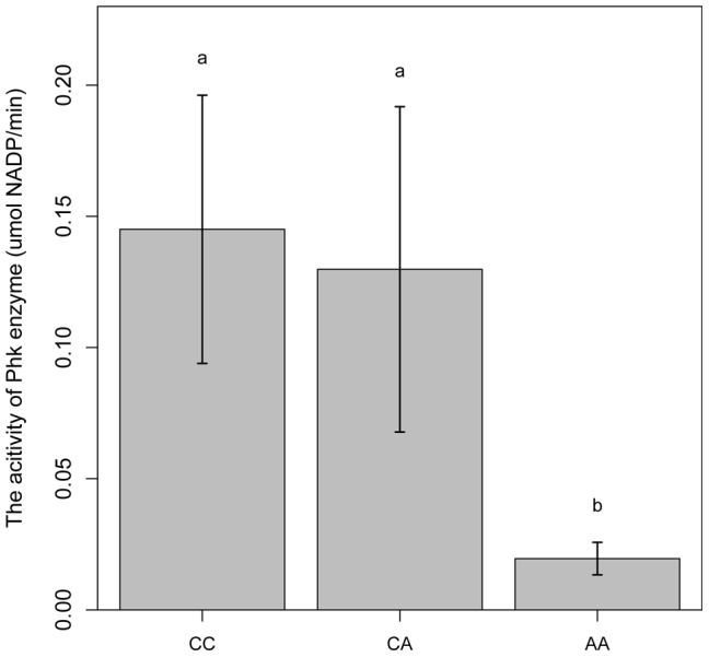 Comparison of PhK enzyme activities in longissimus muscle of animals with different PHKG1 g.8283 A > C genotypes. Bars with different letters are significantly different. Data are means ±1 SEM (n = 6 per genotype).