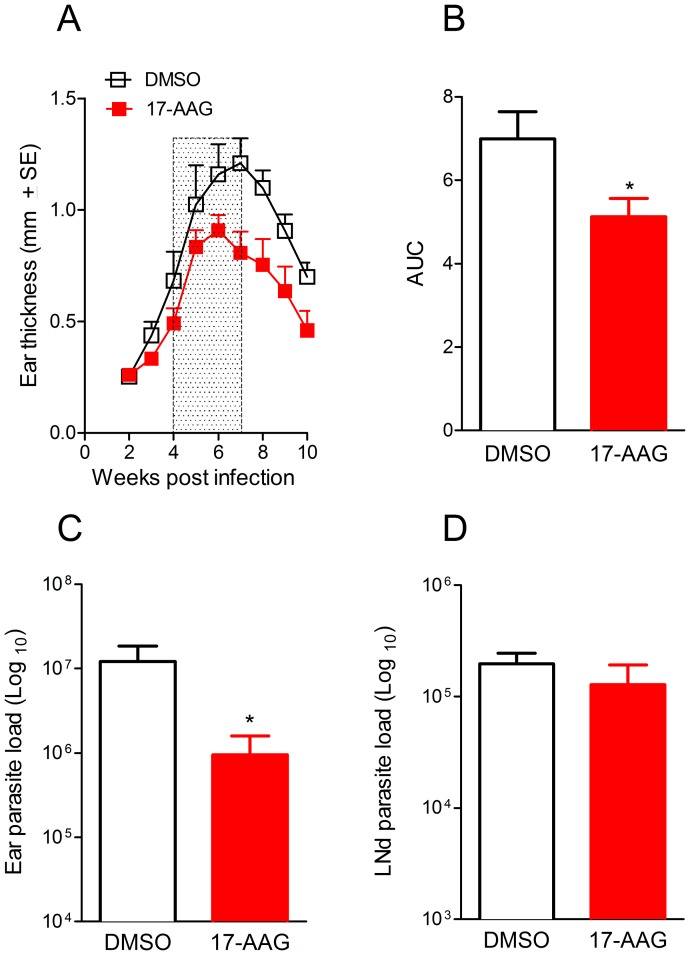 In vivo treatment with 17-AAG decreases L. (V.) braziliensis infection. Mice were infected with L. (V.) braziliensis and four weeks later, mice were treated with 17-AAG, 3x a week for 3 weeks (boxed area) or with vehicle (DMSO) alone. (A) The course of lesion development was monitored weekly. (B) Disease burden [shown as Area Under the Curves (AUC) depicted in (A)] in mice treated with 17-AAG or injected with DMSO. Parasite load was determined at the infection site (C) and at the dLN (D), 6 weeks later, by limiting dilution analysis. Data, shown as mean ±SEM, are from one of two independent repeats, each performed with 10 mice in each group (** p