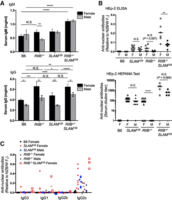 Female-biased production of anti-nuclear antibodies in RIIB −/− mice. (A) The total IgM and IgG levels in sera from different lines, including B6, RIIB −/− , SLAM 129 , and RIIB −/− SLAM 129 , at 24–28 weeks of age of both genders were measured by ELISA. For IgM and IgG determinations in male B6 mice, n =3 and 5, respectively; for other determinations, n ≥8. The data in each panel are from two separate measurements and are presented as means ± S.D. * P