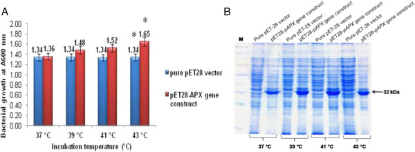 Heat stress study of recombinant E. coli BL21 (pET28a- TapAPX ) cells. OD reading of E. coli BL21 (pET28) cells and E. coli BL21 (pET28- TapAPX ) cells grown at different temperatures after IPTG induction (A) . SDS-PAGE analysis of total protein (10 μg) of E. coli BL21 (pET28) cells and E. coli BL21 (pET28- T a pAPX ) cells subjected to heat stress, M-Marker (B) . *indicates significant difference as determined by simple pair wise t-test comparison (α = 0.05).