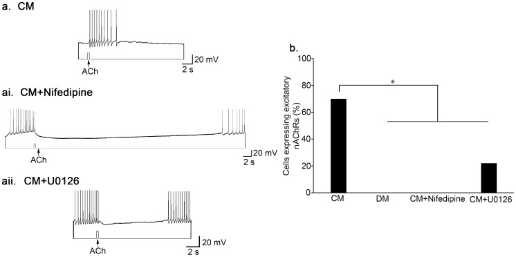 Calcium influx through L-type VGCCs and MAPK/ERK are required for the expression of excitatory nAChRs. ( a ) Single LPeD1 neurons were cultured in CM and impaled with intracellular electrodes. Exogenous application of ACh (10 −6 M) triggered an excitatory response in the postsynaptic neuron, LPeD1 (n = 30). ( ai ) Exogenous application of ACh to LPeD1 somata induced an inhibitory response in the presence the L-type VGCC blocker nifedipine (n = 9) (10 µM). ( aii ) The expression of excitatory nAChRs was also prevented by the MEK1/2 inhibitor, U0126 (40 µM) n = 9. ( b ) Summary of the percentage of cells that functionally exhibited excitatory nAChRs with a significance of P