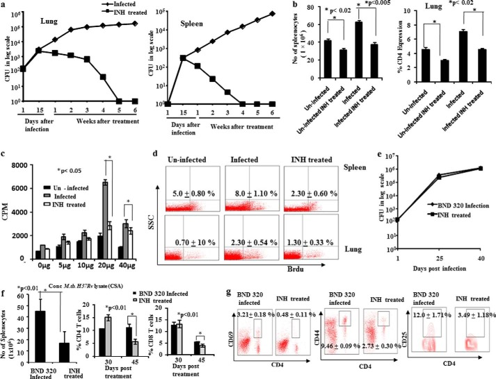 The antituberculosis drug Isoniazid suppresses host immunity by inducing activation-induced cell death in T cells. a , lung and spleen cfu. Mice infected with a high dose aerosol inoculum (∼150 cfu/mice) of M. tuberculosis strain H37Rv were sacrificed at various time points. Lungs and spleens were harvested, homogenized in 0.2 μ m filtered PBS containing 0.05% Tween 80, and plated onto 7H11 Middlebrook plates containing 10% oleic acid, albumin, dextrose, and catalase. Undiluted, 10-fold, 100-fold, and 1000-fold diluted lung and spleen cell homogenates were plated in duplicate on the above 7H11 agar plates and incubated at 37 °C for 21 days. Colonies were counted, and cfu were estimated. Data shown here are representative of five independent experiments. Each cfu experiment has been carried out with three mice per experiment. b , left panel , total number of splenocytes 30 days post-treatment. Total numbers of splenocytes were counted using a hemocytometer after preparation of single cell suspensions following isolation of spleens from mice. Data shown here are representative of five independent experiments with three mice in each group and represent the mean ± S.D. values. Right panel , the percentage of CD4 + T cells in lungs. Lung lymphocytes were stained with anti-CD4 antibodies, and data were acquired by flow cytometry. The percentage of cells expressing CD4 is shown in the bar diagram with mean ± S.D. Data shown here are representative of five independent experiments with three mice in each group. c , antigen-specific T cell proliferation. T lymphocytes were isolated from spleens of mice 30 days post-treatment with INH, and T cell proliferation assays were performed using tritiated thymidine after stimulation with M. tuberculosis H37Rv CSA. Data shown here are representative of five independent experiments with three mice in each group and represent the mean ± S.D. values. d , in vivo T cell proliferation in spleen and lung. To determine the status of host T ce