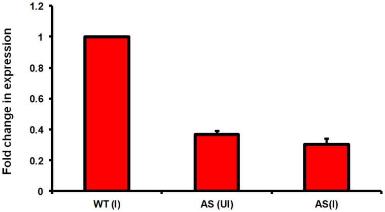 Expression level of Rv1211 in M. tuberculosis Rv1211AS. Expression levels of Rv1211 was determined in wild type M. tb H37Rv and uninduced (UI) and acetamide induced (I) M. tuberculosis Rv1211AS by qRT PCR. Graph depicts fold change in expression of Rv1211 in M. tb Rv1211AS (induced and uninduced) relative to Rv1211 expression in wild type M. tb H37Rv. Values represent mean ± SD of duplicates from two independent experiments.