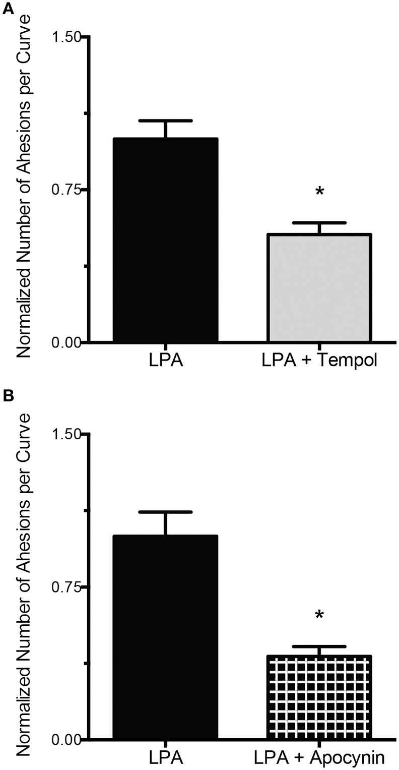 ROS inhibition abolishes the LPA-induced increase in FN-integrin binding . (A) Incubation of VSMC with LPA (2 μM) for 2 h in the presence of tempol (250 μM, n = 36) results in a 47% decrease in FN-integrin adhesion compared with LPA alone ( n = 35). (B) Compared with LPA alone ( n = 40), 2 h of LPA (2 μM) treatment, in the presence of apocynin (300 μM, n = 39), reduced FN-integrin adhesion by 59%. Data are means ± s.e.m. * P