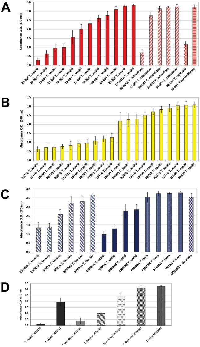 Inter and intra species variation in the biofilm production of 54 Trichosporon spp. clinical isolates and 7 reference strains. A- 19 isolates from blood identified as T. asahii, T. asteroides, T. coremiiforme and T. dermatis . B- 20 isolates from urine identified as T. asahii . C- 15 isolates from superficial mycosis/skin colonization identified as T. asahii, T. dermatis, T. faecale and T. inkin . D- 7 reference strains from CBS obtained from different sources.