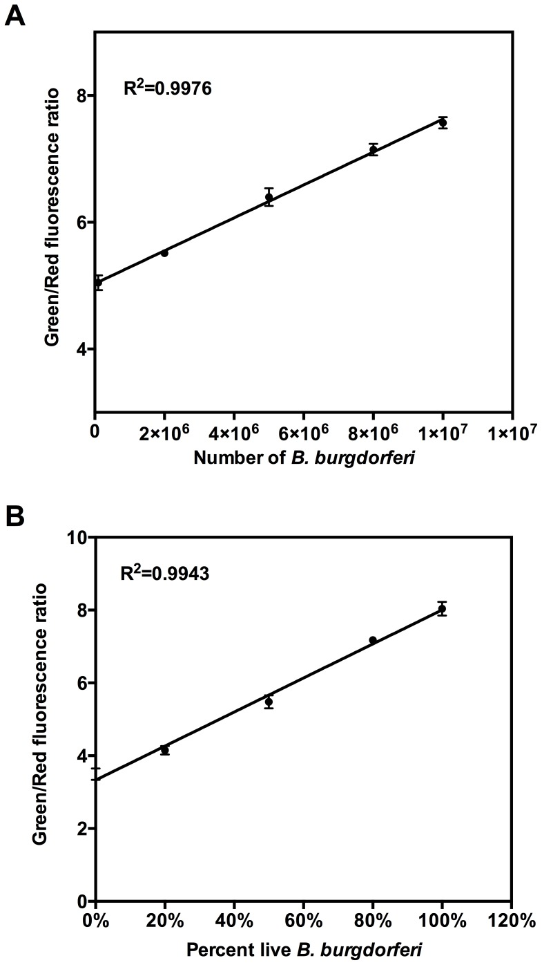 Linear relationship between the B. burgdorferi viability and Green/Red fluorescence ratio of the SYBR Green I/PI assay. (A) The linear relationship between the number of spirochetes and Green/Red fluorescence ratio. (B) Emission spectra of suspensions of various proportions of live and isopropyl alcohol-killed B. burgdorferi were obtained, and the Green/Red fluorescence ratios were calculated for each proportion of live/dead cells. The line is a least-square fit of the relationship between percentage of live bacteria and Green/Red fluorescence ratio.
