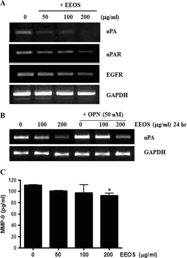 Effect EEOS on the expression of uPA, uPAR and EGFR in NCI-H460 cells. (A) RT-PCR analysis showed that EEOS attenuated the expression of uPA, uPAR and EGFR in NCI-H460 cells. (B) Effect EEOS on the mRNA expression of uPA in OPN treated NCI-H460 cells. (C) Effect EEOS on MMP-9 activity in NCI-H460 cells by ELISA.