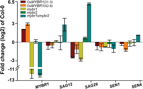 MYBR1 and MYBR2 regulate expression of some senescence-related genes. QRT-PCR was performed on total RNA extracted from rosette leaves numbers 3–5 of 21 d old soil grown plants of WT (Col-0), gain- and loss-of MYBR1 function as well as mybr2 and double mutant mybr1 x mybr2 . Standard error (n = 2) of biological repeats are indicated.