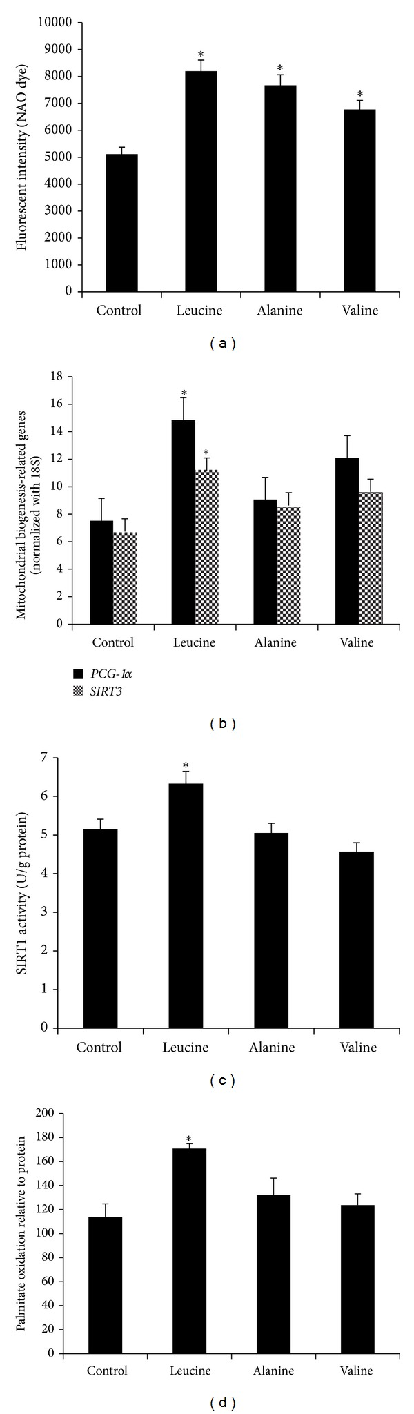 Leucine treatment induces mitochondrial biogenesis and SIRT1 enzymatic activity in C2C12 myotubes. (a) Mitochondrial content was quantitated with NAO dye (10 μ M) 48 hours after treatment with leucine (0.5 mM), alanine (0.5 mM), and valine (0.5 mM); (b) mRNA expression levels of PGC-1α and Sirt3 with the same treatments were evaluated by quantitative RT-PCR. The relative mRNA expression was normalized to 18S and expressed as dark bars for PGC-1α and grey bars for Sirt3 . (c) Cellular SIRT1 activity and (d) palmitate oxidation were measured after treatment for 48 hours. The results were normalized to cellular protein level for each sample. Data are mean ± SE ( n = 4). *Significantly different from controls with P