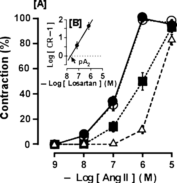Effect of the AT 1 receptor antagonist losartan (■ 10 −7 M, Δ 10 −6 M) and the AT 2 receptor antagonist PD123319 (○, 10 −6 M) on angiotensin (Ang) II-induced contraction (●) [A] and Schild plot of losartan [B] in the isolated mouse basilar artery. The maximum contraction induced by Ang II in the absence of antagonist was taken as 100%. Each point represents the mean ± SEM of 7 mice. CR: see Fig. 2 .