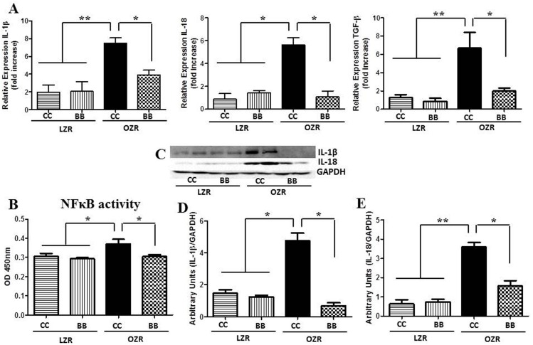 Effect of BB on the renal inflammatory profile in MetS animals. The (A) mRNA expression (n = 6) of IL-1β, IL-18 and TGF-β in the renal cortical tissues. (B) DNA binding activity of NFκB p65 subunit in renal cortical tissues of rats from each experimental group (n = 6), as determined by ELISA. Increased NFκB p65 DNA binding activity in MetS animals was significantly reduced by BB treatment. (C) A representative western blot showing IL-1β and IL-18 protein expression. Western blot bands for IL-1β (D) and IL-18 (E) were analyzed and quantified by densitometry. All values are presented as mean ± SEM (*p