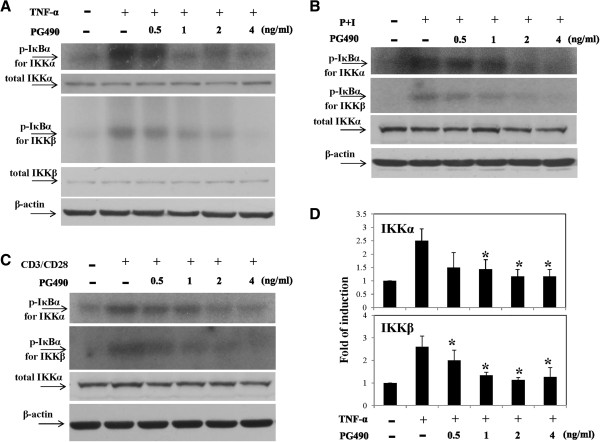 PG490 inhibited both IKKα and IKKβ kinase activity. T cells were pretreated with various concentrations of PG490 for 2 h and then stimulated with TNF-α for 10 min (A) , PMA + ionomycin for 15 min (B) or <t>CD3/CD28</t> for 30 min (C) . Cell pellets were collected and total cell lysates were prepared and analyzed for the kinase activity of IKKα and IKKβ by immunoprecipitation kinase assays. The total IKKα and/or total IKKβ levels were determined by Western blotting. The analysis of PG490-mediated suppression of IKKα and IKKβ activities induced by TNF-α stimulation was performed on pooled data from T cells from 3 different donors (D) . *, P value of