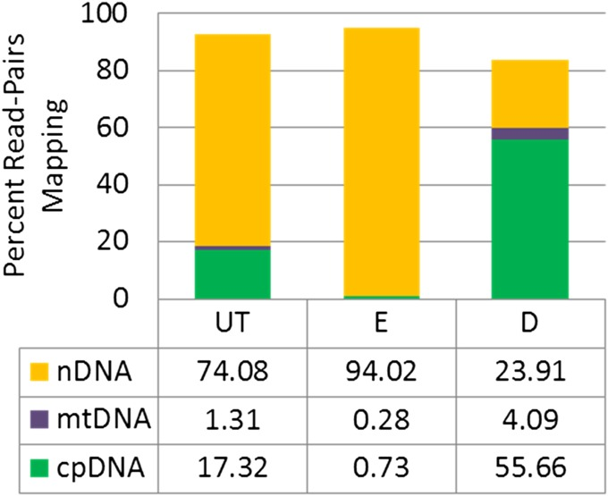 Arabidopsis thaliana read-pairs mapping to any of the three genomes (mitochondrial DNA [mtDNA], chloroplast DNA [cpDNA], and nuclear DNA [nDNA]). UT = untreated genomic DNA (gDNA) library; E = methyl-enriched gDNA library; D = methyl-depleted gDNA library.
