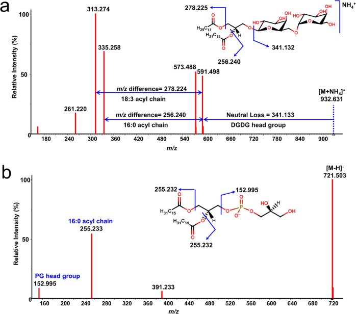 Annotations of lipids by MS2Analyzer. (a) QTOF MS/MS of digalactosyldiacylglycerol 18:3/16:0 in positive <t>electrospray</t> mode, indicating the neutral loss of the DGDG headgroup from the [M + NH 4 ] + adduct precursor ion as well as m / z differences for product ions indicating both acyl side chains. Note that positional isomers of acyl groups cannot be determined with this method. (b) QTOF MS/MS of phosphatidylglycerol 16:0/16:0 in negative electrospray mode, indicating the characteristic product ions of the phosphatidylglycerol headgroup ( m / z 152.995) and the acyl side chains ( m / z 255.233).