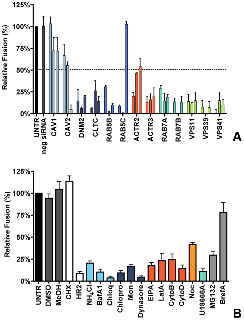 Clathrin-mediated endocytosis and late endosome-to-lysosome trafficking is required for MHV fusion. A ) Fusion assay upon siRNA-mediated gene silencing. Three different siRNAs per gene were transfected individually into HeLa-mCC1a-ΔM15. 72 h post transfection, cells were pre-loaded with FDG by hypotonic shock. MHV-αN was allowed to bind to the cells on ice at MOI = 20 for 90 min. 100 min post warming to 37°C, cells were collected and analyzed by FACS. Fusion was determined relative to the number of FIC-positive cells observed upon mock treatment of infected cells (UNTR). Error bars represent SEM, n = 3. B ) Fusion of MHV upon treatment of cells with different inhibitors was studied as in A. Cells were pretreated with ammonium chloride (NH4Cl), Bafilomycin A1 (BafA1), Chloroquine (Chloq), Chlorpromazine (Chlopro), Monensin (Mon), Dynasore, Dyngo-4A, EIPA, Latrunculin A, (LatA), <t>Jasplakinolide</t> (Jasp), Cytochalasin B (CytoB), Cytochalasin D (DytoD), Nocodazole (Noc), U18666A, MG132, Brefelding A (BrefA), as well as with the solvents dimethyl sulfoxide (DMSO) and methanol (MeOH), protein synthesis inhibitor cyclohexamide (CHX), and MHV fusion inhibitor HR2 peptide (HR2) for 30 min at 37°C. The inhibitors were kept present during binding of MHV-αN to cells and during warming to 37°C cells for 100 min. Fusion was determined relative to the number of FIC-positive cells after mock treatment (UNTR). Error bars represent SEM, n = 3.