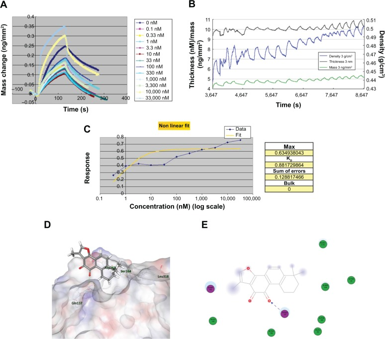 Binding affinity and docking simulation of T2A–APE1 interaction. Notes: ( A ) Real-time DPI measurements of change in mass of immobilized APE1 protein after injection of increased concentrations of T2A. ( B ) Real-time DPI measurements of thickness, density, and mass during addition of T2A to immobilized APE1. ( C ) The assessment of disassociation and association kinetic constants and the dissociation constant K D for the interaction between T2A and APE1. ( D ), ( E ) The detailed 3D ( D ) and 2D ( E ) docking model showing hydrogen-bonding interaction of T2A with Glu-137 of APE1. Abbreviations: T2A, tanshinone IIA; APE, apurinic/apyrimidinic endonuclease; Asp, asparagine; DPI, dual polarization interferometry; Gln, glutamine; Leu, leucine; Ser, serine; 3D, three-dimensional; 2D, two-dimensional.