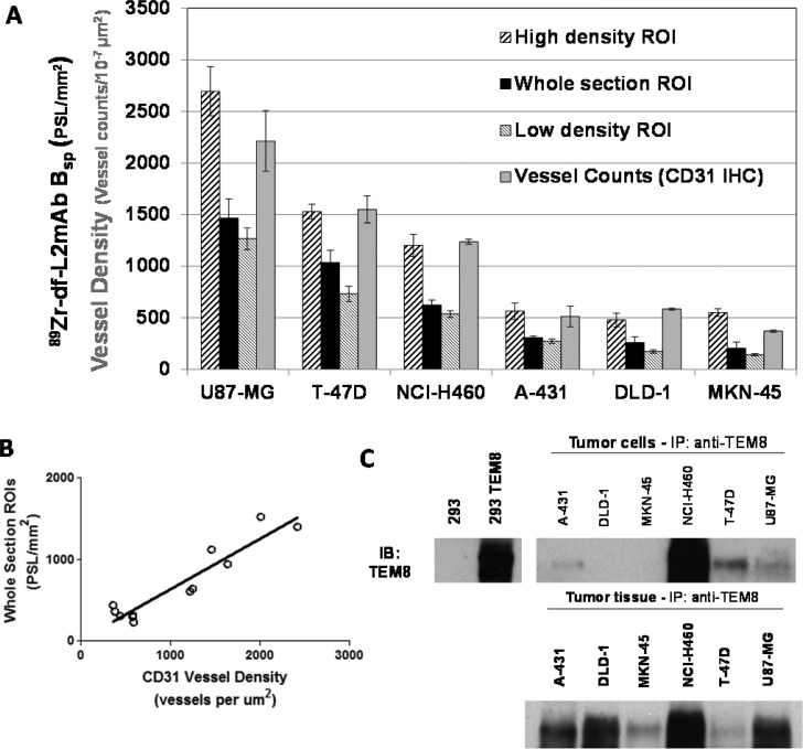(A) Comparison of the quantitative regional distribution of 89 Zr-df–L2mAb in U87-MG, NCI-H460, T-47D, MKN-45, A-431,and DLD-1 tumor whole sections and specific ROIs of high and low density areas from in vitro autoradiography studies. Each bar represents the mean specific bound 89 Zr-df–L2mAb ± SD ( B sp ; B t – B nsb ) in photostimulated luminescence units per mm 2 (PSL/mm 2 ) calculated from ROIs representing total 89 Zr-L2mAb bound ( B t ) and corresponding ROIs representing nonspecific binding (+ 10 –6 M L2mAb) [high density ROIs, n = 4; whole section ROIs, n = 2; low density ROIs, n = 4]. The bars representing quantitative vessel counts (vessel counts/10 –7 μm 2 ) are the mean ± SD ( n = 2) determined from CD31 IHC staining of whole sections. (B) Correlation of whole section ROIs (PSL/mm 2 , 89 Zr-df–L2mAb specific binding) to vessel density (vessels per 10 –7 μm 2 ), Spearman r = 0.7622, P = 0.0055. (C) Comparison of TEM8 protein in A431, DLD-1, MKN-45, NCI-H460, T-47D, and U87-MG cells and tumors determined by immunoprecipitation and Western blotting.