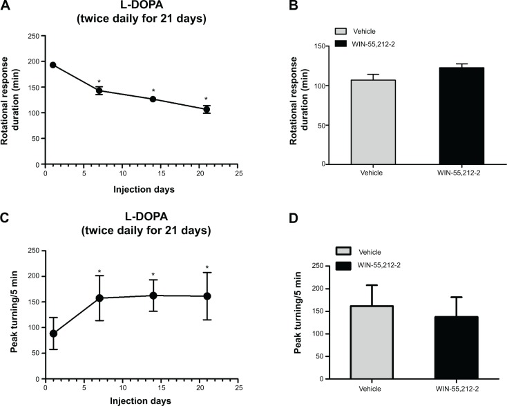 Effects of acute administration of WIN-55,212-2 on dyskinetic responses to L-DOPA in 6-OHDA-lesioned rats. Notes: ( A ) Effects of chronic L-DOPA administration on the duration of rotational responses. ( B ) Effects of WIN-55,212-2 on the duration of rotational responses to L-DOPA. ( C ) Effects of chronic L-DOPA administration on peak turning responses. ( D ) Effects of WIN-55,212-2 on peak turning responses to L-DOPA. All 6-OHDA-lesioned rats received IP injections of L-DOPA at 50 mg/kg and benserazide at 12.5 mg/kg (twice daily for 21 days). Rotational responses and peak turning were measured immediately after L-DOPA injections at day 1, 7, 14, and 21 ( A and C ). At day 22, rats were randomly divided into two groups (n=7 per group) and received co-administration of WIN-55,212-2 (1 mg/kg, IP) or vehicle with L-DOPA/benserazide. Behavioral activities were measured following L-DOPA injection ( C and D ). * P