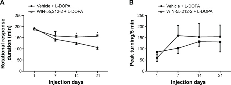 Effects of chronic administration of WIN-55,212-2 on dyskinetic responses to L-DOPA in 6-OHDA-lesioned rats. Notes: ( A ) Effects of WIN-55,212-2 on the duration of rotational responses to L-DOPA. ( B ) Effects of WIN-55,212-2 on peak turning responses to L-DOPA. In 6-OHDA-lesioned rats, WIN-55,212-2 (1 mg/kg, IP) or vehicle was co-administered with L-DOPA (50 mg/kg, IP) and benserazide (12.5 mg/kg, IP) for 21 days. Rotational responses and peak turning were measured immediately after L-DOPA injection at day 1, 7, 14, and 21. Data are expressed as means ± SEM (n=7 per group). * P