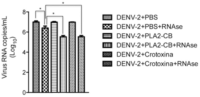 Analysis of the exposure of DENV-2 genomic RNA. DENV-2 was first treated with PLA 2 -CB, crotoxin (8 ng/µL each) or PBS at 37°C and then with RNase-A. Virus RNA degradation was evaluated by qRT-PCR. The data represent mean values ± standard deviations (SD) for three independent experiments. The asterisks indicate statistically significant differences among groups (*p