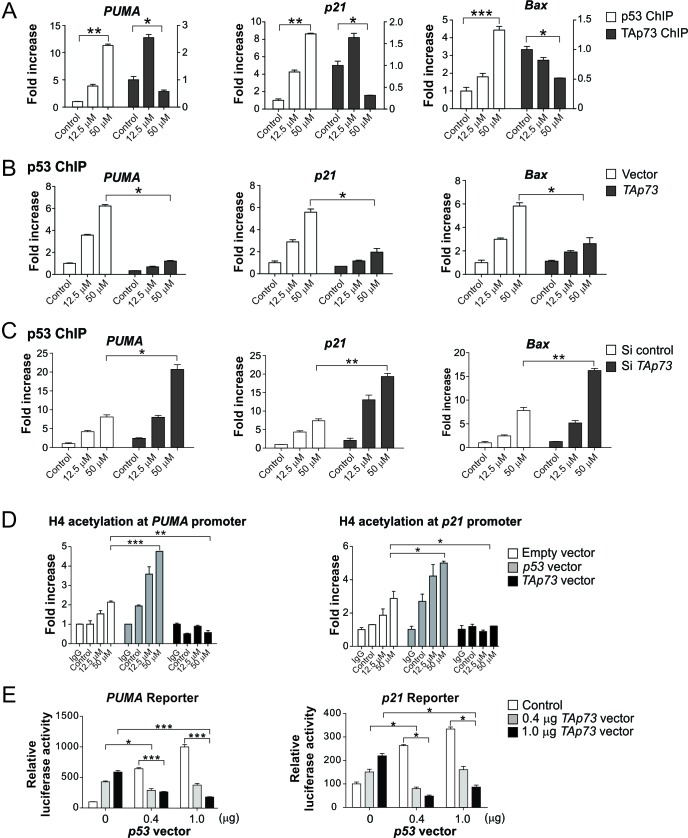 TAp73 inhibits p53 binding to its target gene promoters following excessive DNA damage (A) HCT116 cells with Flag-TAp73 KI were treated with cisplatin at indicated concentrations for 24 hr. Chromatin immunoprecipitation (ChIP) followed by quantitative real-time PCR was used to analyze the binding of p53 and TAp73 to the promoters of PUMA , Bax and p21 , using anti-p53 antibody and anti-Flag-conjugated beads, respectively. Results were normalized to those of IgG (for p53 ChIP) and parental HCT116 (for TAp73 ChIP), which were used as negative controls for ChIP, and plotted as fold of enrichment relative to the control. (B) Flag-KI HCT116 cells were transfected with control or HA-TAp73α construct, and then treated with cisplatin at indicated concentrations for 24 hr. Occupancy of p53 at the indicated promoters was analyzed by ChIP as in (A). (C) Flag-KI HCT116 cells were transfected with control or TAp73 siRNA, and then treated with cisplatin at indicated concentrations for 24 hr. Binding of p53 to the indicated promoters was analyzed as in (A). (D) HCT116 cells were transfected with p53 or TAp73α, and treated with cisplatin at indicated concentrations for 24 hr. Histone H4 acetylation, a marker of transcriptional activation, in PUMA and p21 promoters was analyzed by ChIP using an antibody specific for acetylated H4. The results were normalized to those of input. (E) p53 -KO HCT116 cells were co-transfected with a PUMA or p21 luciferase reporter, along with indicated amounts of p53 and TAp73α expression vectors, or control empty vectors. Activation of the PUMA and p21 reporters was measured 24 hr after transfection, as described in the Materials and Methods. Results in (A)-(E) were expressed as means ± s.d. of three independent experiments. *** , P