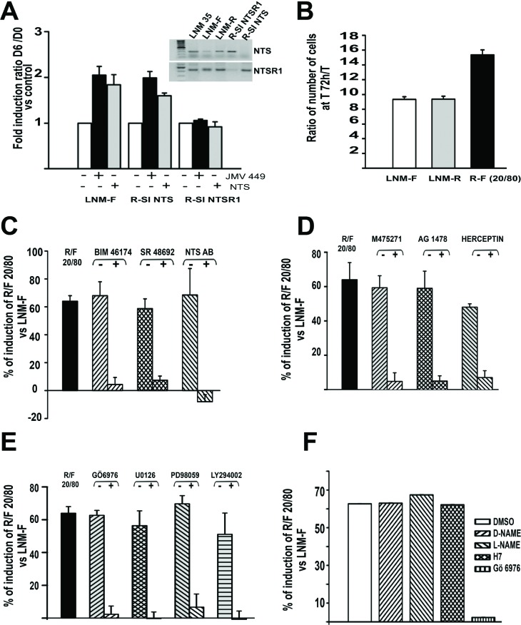 NTS autocrine and paracrine regulation enhanced cellular growth in human lung cancer cell lines (A) Influence of NTS exogenous treatment on lung cancer cell growth. LNM-F, R-SI NTS and R-SI NTSR1 were grown in media containing 0 % FCS at low concentration and treated every day with 10 -8 M NTS or JMV 449 for 6 days. The ratio of the number of cells at Day 6/Day 0 was calculated. The result is expressed as the % of fold induction. Inset , NTS and NTSR1 transcripts analysis from a total of 200 ng of LNM-35, LNM-R, LNM-F, R-SI NTSR1 and R-SI NTS total RNA. (B) LNM-R and LNM-F were seeded alone or at the ratio of 20/80 LNM-R/LNM-F and grown in 0.1% FCS for 72h. The results are expressed as the ratio of the number of cells at 72h to T0 was calculated, and are the mean ± SEM of 7 independent experiments. C to F ) LNM-R and LNM-F were seeded alone or at the ratio of 20/80 LNM-R/LNM-F and grown in 0.1% FCS for 72h, The ratio of the number of cells at 72h to T0 was calculated. The results are expressed as the percentage of the growth induction compared to LNM-F. Results are the mean ± SEM of 2 to 5 independent experiments. Cells were exposed to (C) DMSO, 10 -7 M BIM 46174, 10 -6 M SR 48692, 1/200 rabbit IgG or anti NTS antibody. (D) DMSO, 10 -7 M M475271, 10 -5 M AG1478, PBS, or 50 μg/ml Herceptin. (E) 5×10 -6 M Gö6976, 10 -6 M U0126, 10 -6 M PD98059, or 10 -7 M LY294002. F) DMSO, 10 -5 M D-NAME, 10 -5 M L-NAME, 10 -5 M H7 or 5 10 -6 M Gö6976.