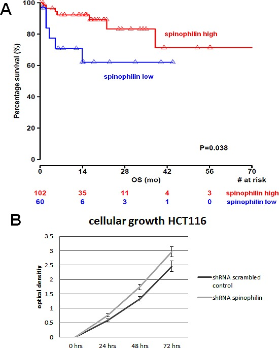 Spinophilin expression and influence on survival and cellular growth (A) In 162 available patients of The Cancer Genome Atlas data set, a low spinophilin expression is associated with poor survival. (B) Silencing of spinophilin by shRNA in HCT116 cells leads to increased cellular growth rate in the WST-1 assay (0 to 72 hours, p