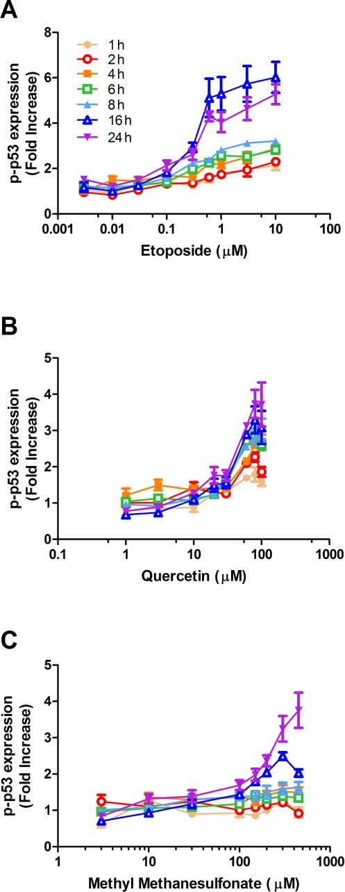 Time- and concentration-dependent response for p-p53(ser15) induction in HT1080 cells following exposure to (A) etoposide, (B) quercetin, and (C) methyl methanesulfonate. Cells were treated with DMSO (0.1%), etoposide, quercetin, or methyl methanesulfonate for 1, 2, 4, 6, 8, 16, or 24 h and analyzed for p-p53 using flow cytometry. Circles and triangles represent the mean of three independent experiments (three biological replicates, each with three technical replicates). Bars represent the standard error of the mean (SEM).