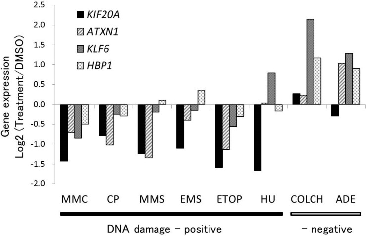 Expression profiles of four genes on treatment with the genotoxins used in microarray analysis. The genes ATXN1 , KIF20A , KLF6 , and HBP1 , which are a part of CDKN1A -centered network, were downregulated in response to DNA damage. The log base 2 values of the ratio of alterations in the expression of these four downregulated genes to the mean values of the corresponding control obtained from the microarray data (single experiment in duplicate) are shown. TK6 cells were treated with MMC, mitomycin C; CP, cisplatin; MMS, methyl methanesulfonate; EMS, ethyl methanesulfonate; ETOP, etoposide; HU, hydroxyurea; COLCH, colchicine; and ADE, adenine; for 4 h at concentrations corresponding to 50% of relative cell growth (RCG) compared to number of cells in vehicle control, and allowed to recover for 20 h in standard cell culture medium.