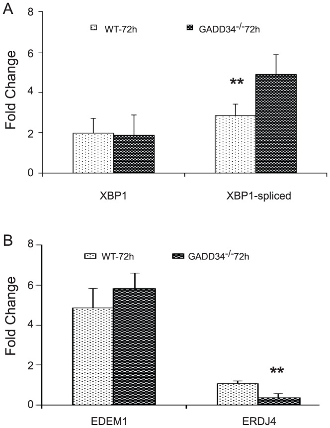 Expression of spliced <t>XBP1</t> and its downstream target genes. qRT-PCR data shows significant differences in transcript levels of spliced XBP1 (A) and ERDJ4 (B) in GADD34 -/- mice compared to WT mice at 72 hours post-SCI.