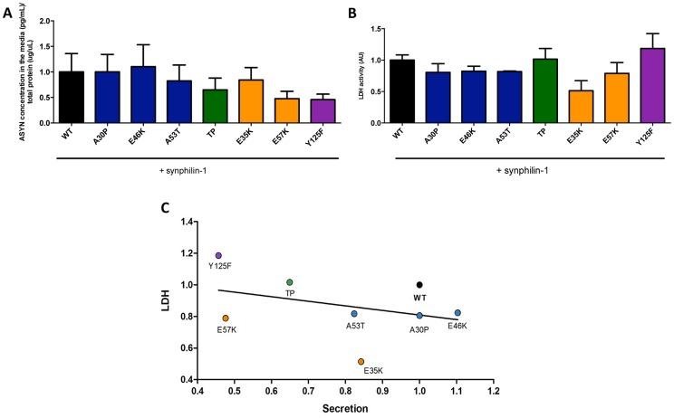 ASYN secretion is inversely correlated with toxicity. A. Secretion of ASYN. B. Toxicity measurements. Medium from H4 cells were collected to determine the secretion and the percentage cytotoxicity for each mutant. To measure the release of ASYN, an ELISA assay was performed. Using the same media we also measured the release of lactate dehydrogenase as a measure of cytotoxicity. We observed that these values were inversely correlated with those obtained in the release/secretion experiments. A decrease trend particularly for TP and Y125F detected in terms of secretion, was higher in toxicity. n = 3. C. Correlation between Secretion and Toxicity. The graph shows the inverse trend in secretion and toxicity.