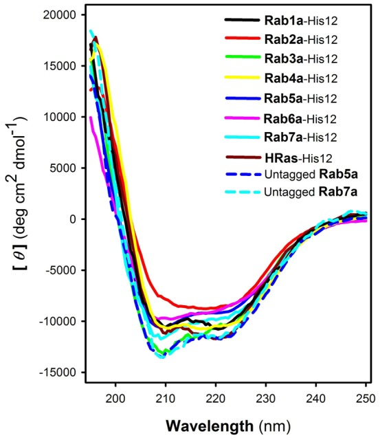 CD spectra of purified human Rab GTPases. Far-UV CD spectra of Rab1a-His12 (black), Rab2a-His12 (red), Rab3a-His12 (green), Rab4a-His12 (yellow), Rab5a-His12 (blue), Rab6a-His12 (pink), Rab7a-His12 (cyan), HRas-His12 (brown), untagged Rab5a (blue dashed line), and untagged Rab7a (cyan dashed line), in HN150 (20 mM Hepes-NaOH, pH 7.4, 150 mM NaCl) containing glycerol (10%), MgCl 2 (5 mM), and DTT (1 mM).