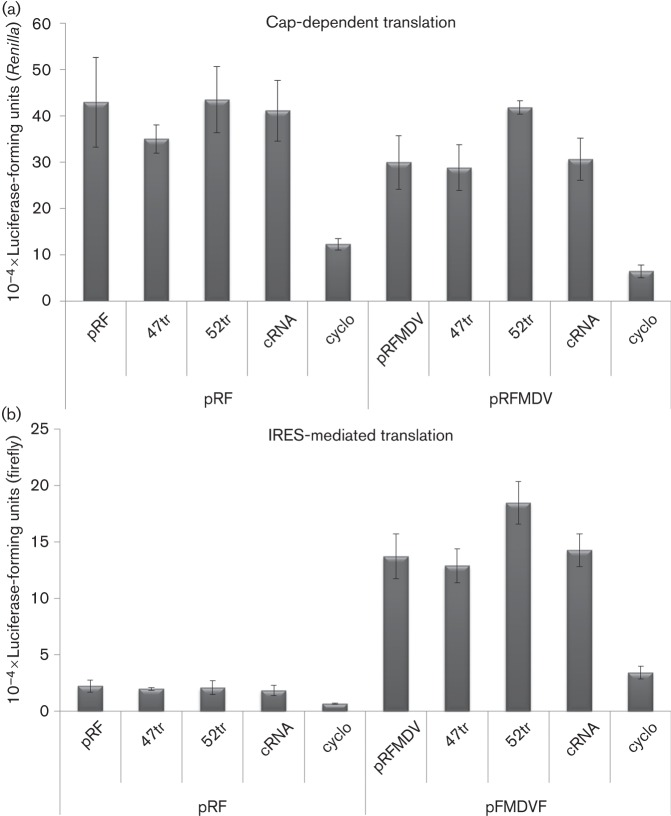 Effect of aptamers on translation. BHK-21 cells were transfected with a construct containing Renilla and firefly luciferase reporter genes under either (a) cap- or (b) FMDV IRES-mediated translation respectively (pRFMDVF). At 24 h post-transfection of the constructs, cells were subjected to a second transfection with aptamers 2′F-Cy3-47tr, 2′F-Cy3-52tr or cRNA. Cells transfected with the pGFP-PAC replicon and either subjected to a second mock-transfection or treated with 1 µg cycloheximide (cyclo) µl −1 were included as controls. Cells were lysed 24 h post-treatment and firefly and Renilla luciferase units (RLU) were measured using the dual-luciferase reporter assay system (Promega). A construct (pRF) containing only a cap-mediated Renilla luciferase reporter was included as a further control. Data are means± se of three experiments. Statistical analysis was conducted using a t- test ( P
