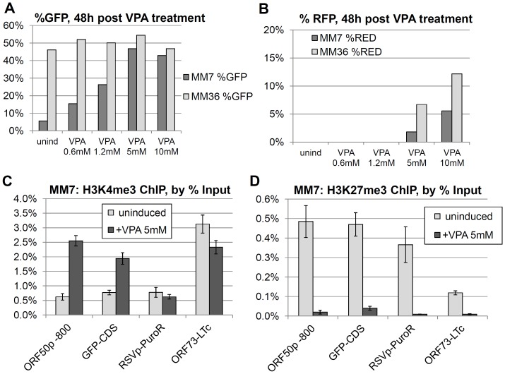 Reversal of MM7.219 GFP silencing by valproic acid treatment. At 79 days post-infection, MM7.219 (dark gray bars) and MM36.219 cultures (light gray bars) were exposed to valproic acid (VPA) at the listed concentrations for 54 hours. The percent cells that were GFP + are shown for the listed doses of VPA (A). The percentage of cells scoring positive for RFP at these doses is also shown (B). In a separate experiment performed 32 days post infection, silenced MM7.219 cultures were treated with 5 mM VPA for 2 days. Enrichment of the active H3K4me3 histone mark across four positions on the rKSHV.219 episome are shown as % of input DNA (C). Similarly, repressive H3K27me3 association is shown for the same four regions (D). Values represent the mean +/- S.D. of 4 to 5 PCR replicates (see Methods ).