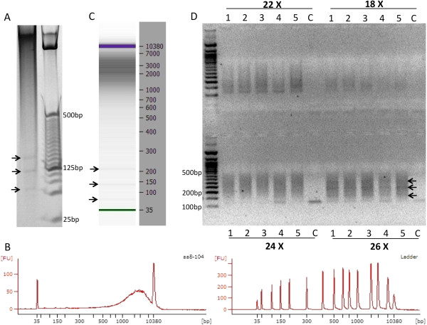 Standards for MspI digestion and progressive PCR. A) MspI digestion of human genomic <t>DNA</t> isolated from human post-mortem brain tissues. DNA (200 ng) was digested by MspI and run on a 4–20% precast polyacrylamide gel and stained with EtBr. Arrows show three satellite DNA bands characteristic of this enzymatic digestion. B) Agilent 2100 Bioanalyzer chromatogram of MspI digested genomic DNA. C) <t>Bioanalyzer</t> 2100 image of a single library from an MspI digested DNA sample. Notice that the satellite bands (indicated by arrows) are still visible on the Bioanalyzer image. D) Progressive PCR amplification combined with limited PCR extension time allows for size selection and amplification of six bisulfite converted libraries (Lanes 1–5 are distinct RRBS libraries; lane 6 ('C') is a negative control). After different progressive PCR cycles (18X, 22X, 24X, or 26X – the same libraries are shown for each cycle number) band intensity increases as cycle number increases. Arrows indicate the three satellite DNA bands that are still visible in these libraries.