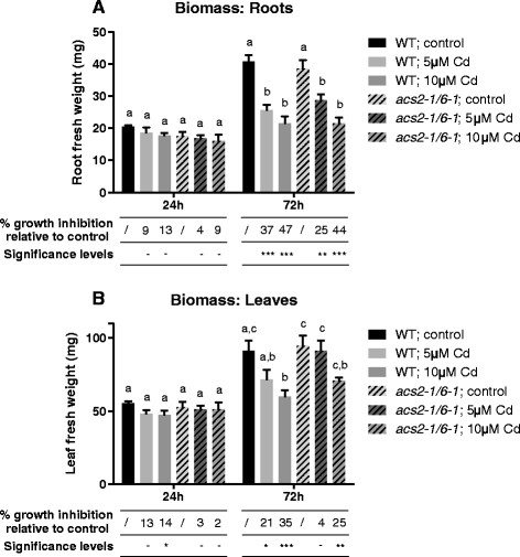 Biomass growth inhibition. A comparison of the fresh weight biomass and growth inhibition (mg) of roots (A) and leaves (B) of 3 weeks old wild-type or acs2-1acs6-1 mutant Arabidopsis thaliana plants exposed for 24 or 72 h to either 5 or 10 μM CdSO 4 or grown under control conditions in a hydroponic culture system. Biomass: Data shows mean ± s.e. of at least 4 biological replicates. The letters a-c represent groups with a significantly different biomass (Tukey's test: p